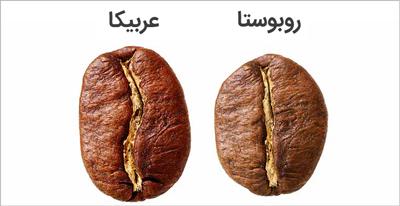 تفاوت قهوه عربیکا با روبوستا
